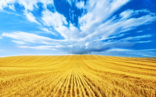 G_golden-wheat-field